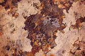 Moss on stone — Stock Photo