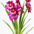 Stock Photo: Violett orchids