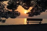 Silhouette di panchina vuota sotto i pini al tramonto — Foto Stock
