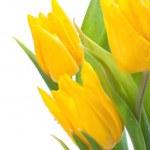 Bunch of Yellow Tulips — Stock Photo #21810065