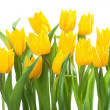 Stock Photo: Bouquet of Yellow Tulips
