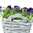 Stock Photo: Sweet Pansies in Plait Basket -Shallow DOF