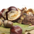 Horse chestnuts, conkers, acorn, autumn leaves — Stock Photo