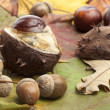 Chestnut, conker, acorns autumn background — Stock Photo #33856749