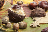 Chestnut, conker, acorns autumn background — Stock Photo