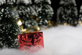 Present in wrapped gift box in forest — Stock Photo