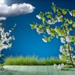 Grass and apple blossom on the background of blue sky — Stock Photo