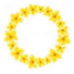 Isolated wreath of Frangipani / plumeria — Stock Vector