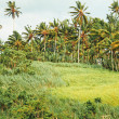 Green field in Bali island with Palm forest - Stock Photo