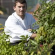 Chef harvests herbs from urban restaurant rooftop - Stock fotografie