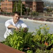 Chef harvests herbs from urban restaurant rooftop - Foto Stock
