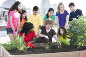 Children of different ethnicities watching as an adult showing them how to plant a garden — Stock Photo