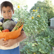 Hispanic boy grows organic vegetables in his backyard garden - Stock Photo
