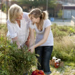 Gardening. Caucasian mother and teenage daughter picking vegetables — Stock Photo #21374439