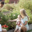 Stock Photo: Gardening. Caucasian family picking vegetables together