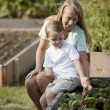 Gardening. Caucasian mother and son picking vegetables together — Stock Photo #21374521