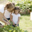 Gardening. Caucasian mother and daughters picking vegetables — Stock Photo #21374561