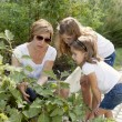 Gardening. Caucasian mother and daughters picking vegetables — Stock Photo #21374569