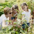 Gardening. Caucasian mother and daughters picking vegetables — Stock Photo