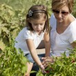 Gardening. Caucasian  mother and her daughter picking peppers — Stock Photo