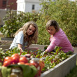 Gardening. Caucasian  mother and her teenage daughter picking vegetables - Stok fotoğraf