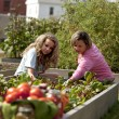 Gardening. Caucasimother and her teenage daughter picking vegetables — Photo #21374611