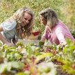 Gardening. Caucasian mother and her teenage daughter laughing and picking vegetables — Stock Photo