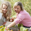 Gardening. Caucasian mother and her teenage daughter picking vegetables — Stock Photo