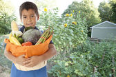 Hispanic boy grows organic vegetables in his backyard garden — Stock Photo