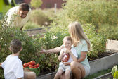 Gardening. Caucasian family picking vegetables together — Stock Photo