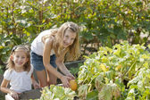 Gardening. Caucasian sisters picking pumpkins together in a garden or pumpkin patch — Stock Photo