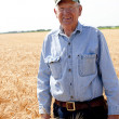Hardworking old farmer stands in wheat field — Stock Photo