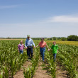 Stock Photo: A proud hardworking midwestern grandmother and grandfather, farmers, stand with grandchildren in a field of corn