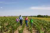 A proud hardworking midwestern grandmother and grandfather, farmers, stand with grandchildren in a field of corn — Zdjęcie stockowe