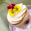 Cupcake with Cherries and Flower — Stock Photo #28144635