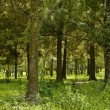 Ecology scene. Forest - Stock Photo
