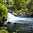 River flow. Ecology scene — Stock Photo