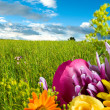 Beautiful colorful flowers on landscape background — Stock fotografie