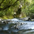 Stock Photo: River flow. Ecology scene