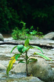 Plant on the river — Stock Photo
