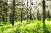 Ecologia scene.forest — Fotografia Stock