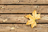 Autumn leaves and wood — Stock Photo
