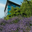 Modern office building detail and nature - Stock Photo