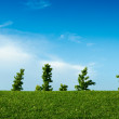 Summer field with blue sky and green grass - Stock Photo