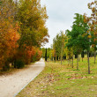 Autumn scene pathway and trees — Stock Photo