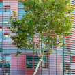 Green business concept: tree and office building — Stock Photo