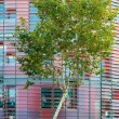 Green business concept: tree and office building — Stock Photo #19421315