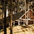 Old Cabin into the woods  — Stock Photo