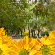 Beatiful yellow flowers in the park — Stock Photo