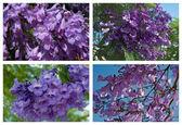 Flowering trees Mediterranean region — Stock Photo